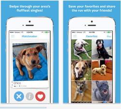 des chiens à adopter, près de chez vous.
