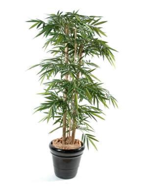 La bambou s 39 implante aussi dans les jardins le bambou mode d coration et autres jdn - Bambou en pot jardiland ...