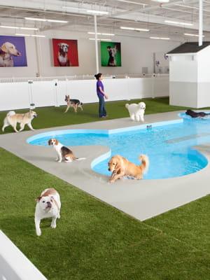 Paradise 4 paws un h tel pour chiens et chats 10 id es de business impor - Jeux d hotel pour animaux ...