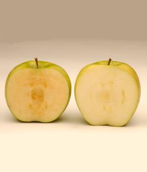 a droite, une pomme normale. a gauche, la pomme arctique qui ne s'oxyde pas à
