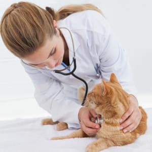 l'inspection générale des finances attribue aux vétérinaires un revenu mensuel