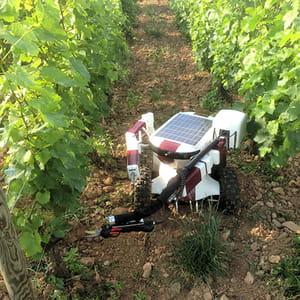 le robot vigneron de wall-ye coûte 25000 euros.