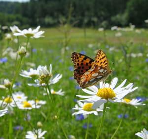 Vendeur de papillons vivants 20 id es de business for Idees entreprises qui marchent