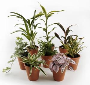 Des plantes d polluantes pour les amis de la nature des for Tous les plantes