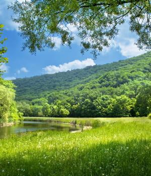 l'avenir des forêts est incertain en france.