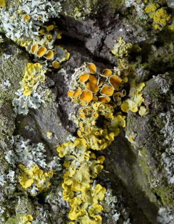 un obscur ouvrage sur les lichens a sauvé amazon de la faillite