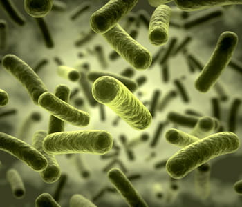 recréer des bactéries en 3d permet de mieux les étudier.