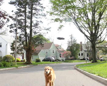 le drone promeneur de chien.