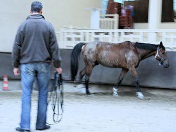 il est presque difficile au coaché de regarder son cheval trotter sans agir