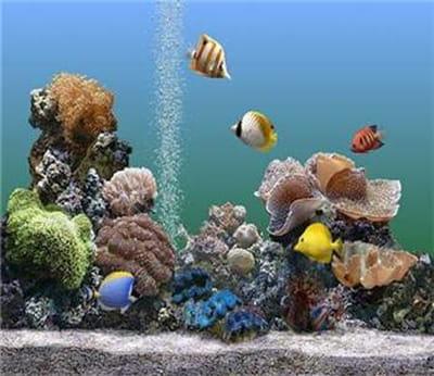 un océan dans l'écran