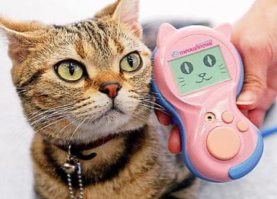 un traducteur de langage chat