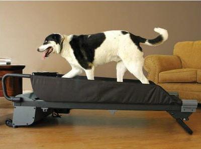 si votre chien a besoin de faire du sport et ne craint pas le ridicule...
