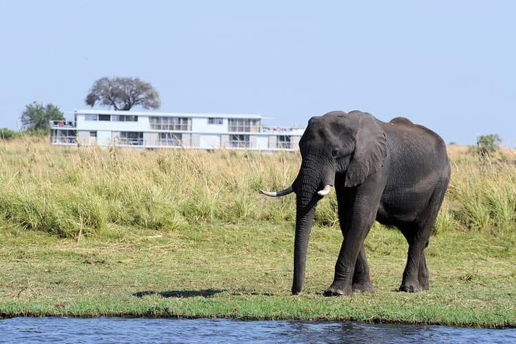 Safari aquatique