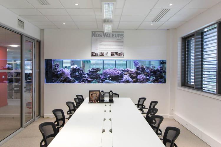 Aquarium en salle de réunion