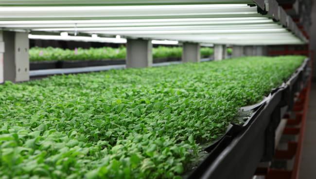 Les fermes d 39 int rieur l 39 avenir de l 39 agriculture for Temperature culture interieur