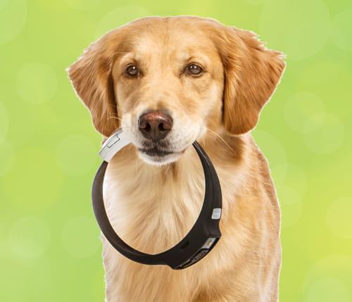 un collier pour enregistrer les exploits de son chien les 20 wearable techs les plus folles jdn. Black Bedroom Furniture Sets. Home Design Ideas