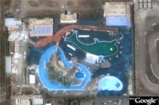 Le monde du dauphin