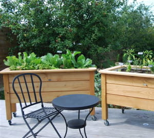 un potager dans ma cuisine sur l ve des bacs de jardinage id e de business le meilleur de. Black Bedroom Furniture Sets. Home Design Ideas