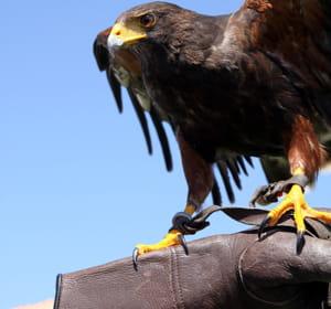 Loueur d 39 animaux hors du commun 20 id es de business for Idees entreprises qui marchent
